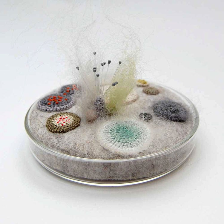 "<a href=https://mymodernmet.com/elin-thomas-felt-fiber-art/ target=_blank >Felted Fungus Art ""Growing"" in Petri Dishes Shows the Unexpectedly Cute Side of Mold</a>"