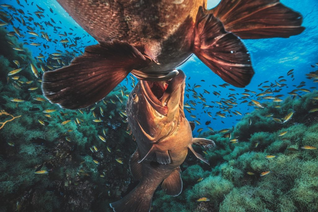 <a href=https://mymodernmet.com/underwater-photography-book/ target=_blank >Top Underwater Photographers Celebrate the Unseen Beauty of the Sea</a>