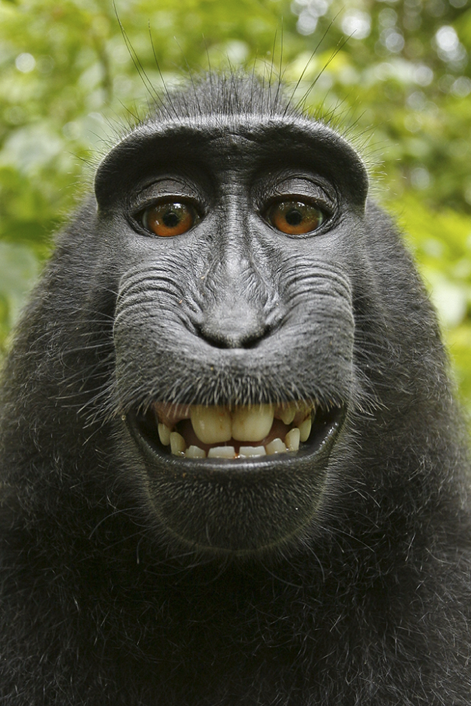 <a href=http://feedproxy.google.com/~r/Demilked/~3/z25HSDP_w4o/ target=_blank >PETA Sues 'Monkey Selfie' Photographer For A Ridiculous Reason, Loses The Case After A Long Battle</a>